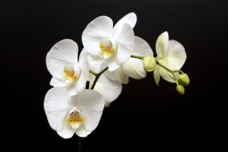 orchid-3323147