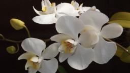 orquidea-188633